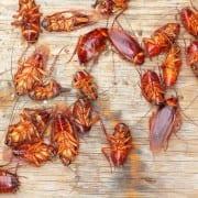 roaches-1030x687